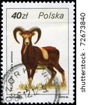 "Small photo of POLAND - CIRCA 1986: A Stamp printed in POLAND shows image of a Argali with the description ""Ovis ammon"" from the series ""Wildlife"", circa 1986"