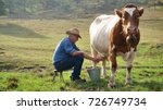 a farmer breeds and cows his... | Shutterstock . vector #726749734