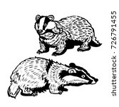 hand drawing of two badgers on...   Shutterstock .eps vector #726791455