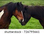icelandic horses  bonding... | Shutterstock . vector #726795661
