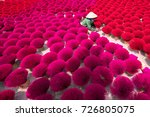 incense sticks drying outdoor... | Shutterstock . vector #726805075