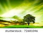 oak tree in summer | Shutterstock . vector #72681046