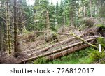 spruce forest with a lot of... | Shutterstock . vector #726812017