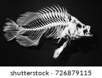 skeleton of ancient fish on a... | Shutterstock . vector #726879115