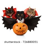 funny cats are celebrating a... | Shutterstock . vector #726880051