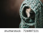 Stock photo a funny dog in a scarf on his head she hid from the cold and can only see the nose and one eye 726887221