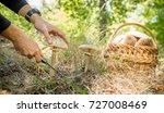 parasol mushroom  macrolepiota... | Shutterstock . vector #727008469