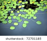 Bright Green Lilly Pad's Cover...