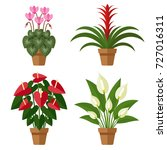 Vector Set Of Indoor Blooming...