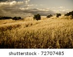 Sicilian Landscape In The...