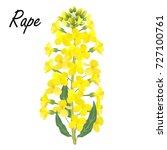 rape  brassica napus  rapeseed  ... | Shutterstock .eps vector #727100761