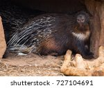 close up image of large spiny... | Shutterstock . vector #727104691