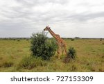 african savanna landscape....   Shutterstock . vector #727153309