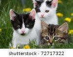 Stock photo kittens 72717322