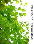 green leaf on light   Shutterstock . vector #727235461