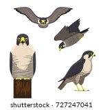 bird peregrine cartoon vector... | Shutterstock .eps vector #727247041