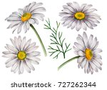 set of watercolor chamomiles ... | Shutterstock . vector #727262344