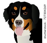 Bernese Mountain Dog Close Up...