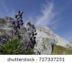 Small photo of Alpine bluebells