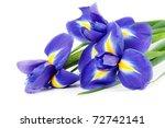 Iris Bouquet Of Fresh Flowers...