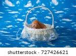 Newborn Kitten In A Felt Basket ...