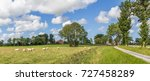 Panorama Of Sheep In A Dutch...