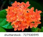 orange flower needle close up... | Shutterstock . vector #727530595