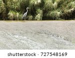 garza cuca on the river world... | Shutterstock . vector #727548169