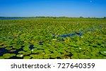 danube delta unesco site in... | Shutterstock . vector #727640359