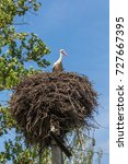 stork in a nest on a pole.... | Shutterstock . vector #727667395