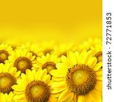 summer sun over the sunflower... | Shutterstock . vector #72771853