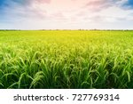 Green Rice Field In Country...