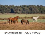 purebred andalusian spanish... | Shutterstock . vector #727774939