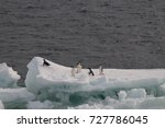 Small photo of A group of Adelie penuins on top of an ice shelf in the Weddell Sea, near Antarctica.