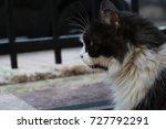 Small photo of cute white black cate profile