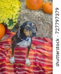 Small photo of Black and Tan Mixed Breed Dog in Shelter