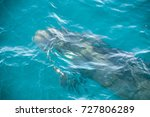 encounter with long finned... | Shutterstock . vector #727806289