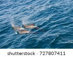 encounter with long finned... | Shutterstock . vector #727807411