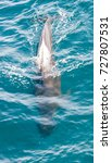encounter with long finned... | Shutterstock . vector #727807531