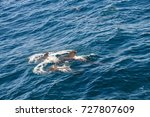 encounter with long finned... | Shutterstock . vector #727807609