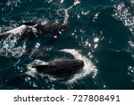 encounter with long finned... | Shutterstock . vector #727808491