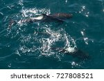encounter with long finned... | Shutterstock . vector #727808521