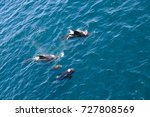 encounter with long finned... | Shutterstock . vector #727808569