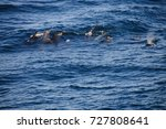 encounter with long finned... | Shutterstock . vector #727808641