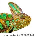 Chameleon Photo Close Up...