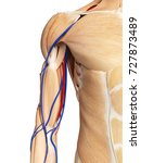 3d rendered medically accurate... | Shutterstock . vector #727873489