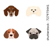 muzzle of different breeds of... | Shutterstock .eps vector #727975441
