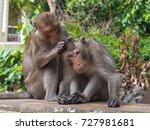 monkey monitors fleas and ticks ... | Shutterstock . vector #727981681