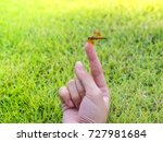 small dragonfly on female hand | Shutterstock . vector #727981684
