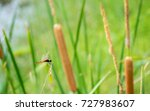 dragonfly and papyrus have a...   Shutterstock . vector #727983607